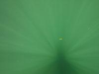 ユカタン半島のグランセノーテの画像006
