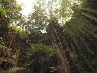 ユカタン半島のグランセノーテの画像016