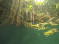 ユカタン半島のグランセノーテの画像018