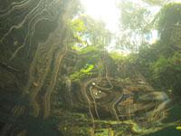 ユカタン半島のグランセノーテの画像020