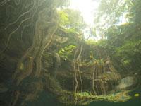 ユカタン半島のグランセノーテの画像021