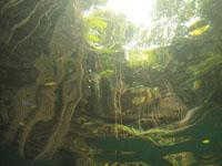 ユカタン半島のグランセノーテの画像022