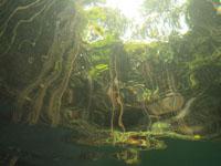 ユカタン半島のグランセノーテの画像023