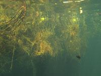 ユカタン半島のグランセノーテの画像030