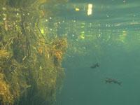 ユカタン半島のグランセノーテの画像031