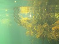 ユカタン半島のグランセノーテの画像032