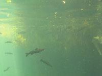 ユカタン半島のグランセノーテの画像033