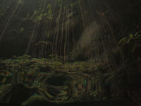 ユカタン半島のグランセノーテの画像036