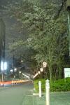 木屋町通り高瀬川の夜桜の画像002