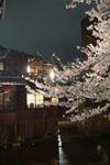 木屋町通り高瀬川の夜桜の画像008
