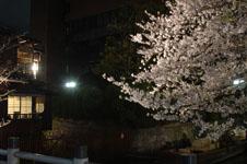 木屋町通り高瀬川の夜桜の画像009
