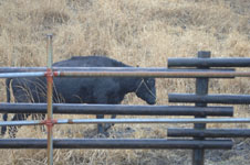 熊本 牛の画像001