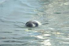 江戸川区自然動物園のオタリアの画像001