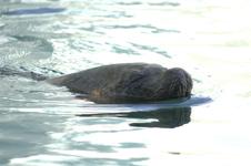 江戸川区自然動物園のオタリアの画像002