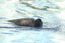江戸川区自然動物園のオタリアの画像003