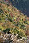 梶ヶ森の紅葉の画像004