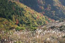 梶ヶ森の紅葉の画像005