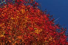四国の紅葉の画像001