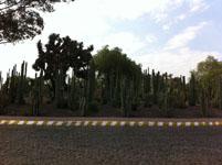 メキシコシティの画像012