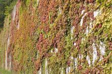 北海道の紅葉の画像001