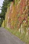 北海道の紅葉の画像002