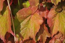 北海道の紅葉の画像003