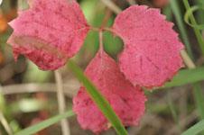 北海道の紅葉の画像004