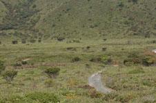 北海道の高原の画像001