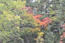 北海道の紅葉の画像005