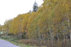 北海道の紅葉の画像006