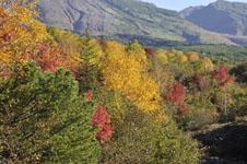 北海道の紅葉の画像011