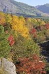 北海道の紅葉の画像012