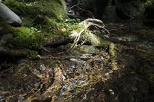西種子谷の川