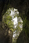 伊尾木洞の画像002