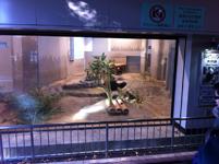 上野動物公園のパンダの画像002