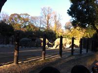 上野動物公園のゾウの画像001