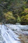 面河渓の紅葉の川の画像001