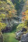 面河渓の紅葉の川の画像002