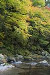 面河渓の紅葉の川の画像003