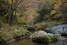 面河渓の紅葉の川の画像004
