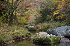 面河渓の紅葉の川の画像005