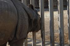 多摩動物公園のクロサイの画像001