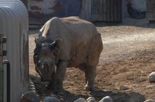 多摩動物公園のクロサイの画像003