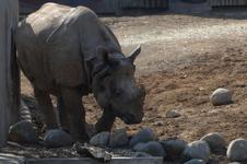 多摩動物公園のクロサイの画像005