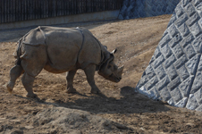 多摩動物公園のクロサイの画像007