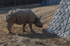 多摩動物公園のクロサイの画像008