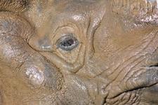 多摩動物公園のインドサイの画像015
