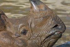 多摩動物公園のインドサイの画像016