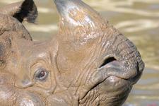 多摩動物公園のインドサイの画像017