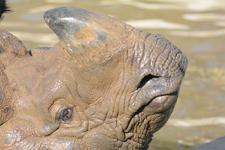 多摩動物公園のインドサイの画像019